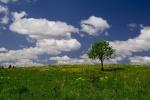 Kestutis Kibickas_Spalvotas pavasaris.jpg